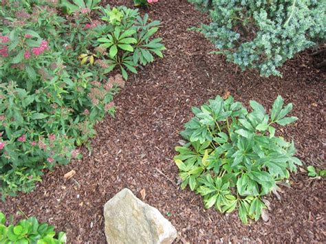 Pilze Im Garten Durch Rindenmulch by Wie Bekomme Ich Pilze Im Rasen Weg Awesome Muss Sich