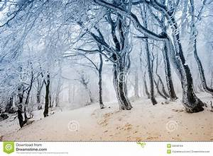 Path Through The Frost Covered Winter Forest Stock Photo ...