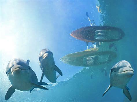 dolphin cay  atlantis paradise island
