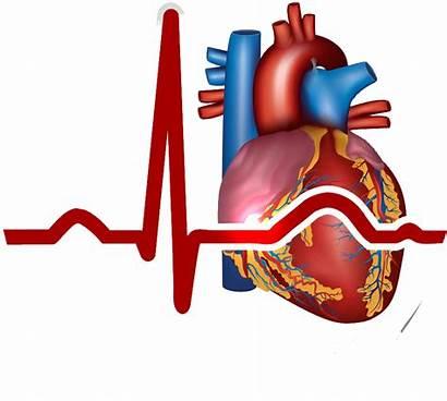 Heart Cardiovascular System Circulatory Clipart Infarction Myocardial