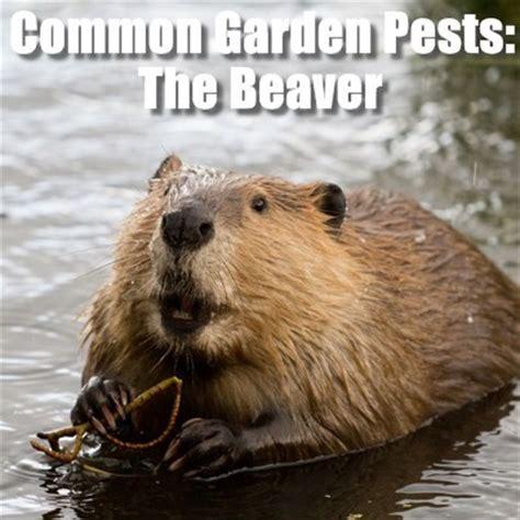 Today Show Common Garden Animal Pests & Sev Gadget