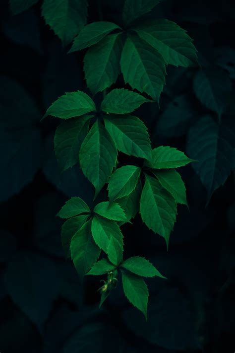 Green Leaves Plant During Night Time Free Image Peakpx