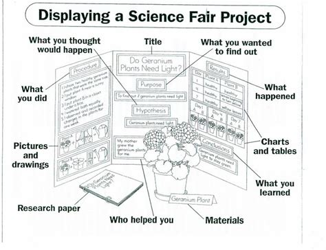 science fair board template science fair sequoia parents association