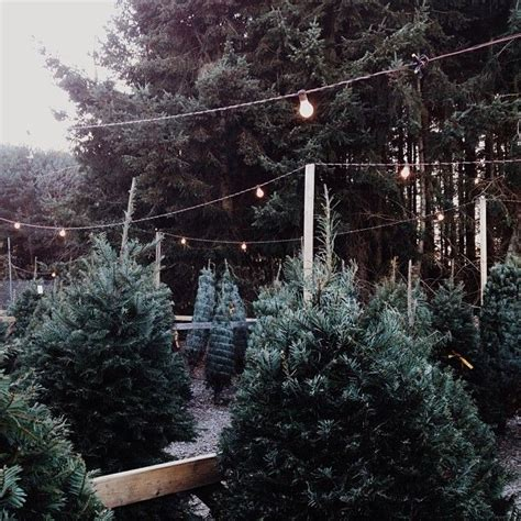 christmas tree lot ideas 1000 ideas about fall tree on thanksgiving tree german pyramid