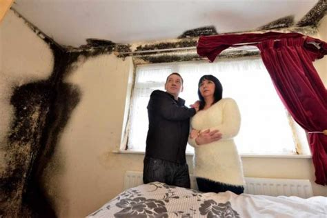 mould   home   toxic stay  home mum