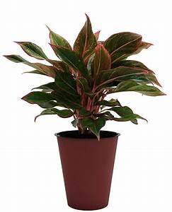 Indoor, Plants, You, Can, Buy, Online, Our, Favorite, Amazon, Shop, Live, Plants