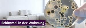 Schimmel In Der Dusche Entfernen : schimmel in der wohnung ursachen und empfehlungen ~ Buech-reservation.com Haus und Dekorationen