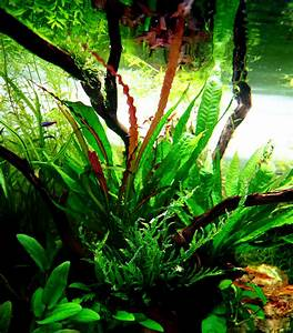 Sauerstoff Im Aquarium : aquarium f r kinder ~ Eleganceandgraceweddings.com Haus und Dekorationen