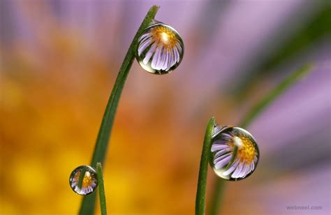 flower water drop reflection photography  preview