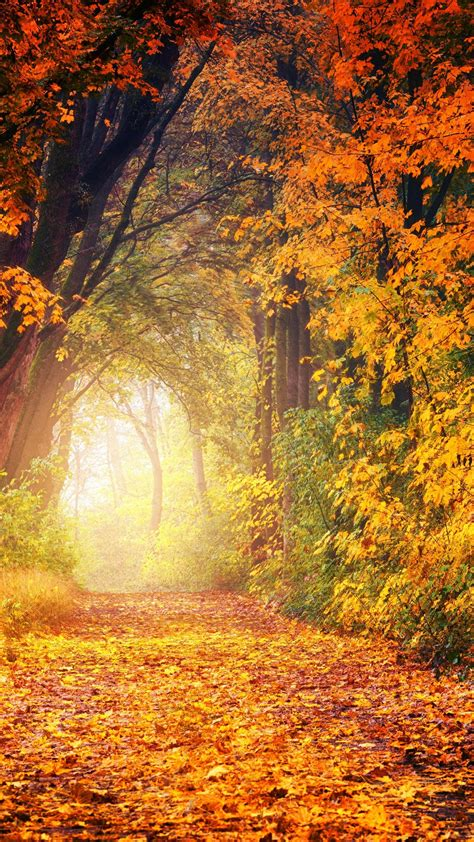 Autumn Wallpapers by Autumn Trees Wallpaper Iphone Android Desktop Backgrounds