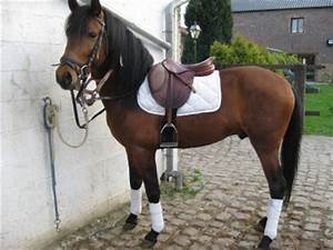 2 Chevaux Occasion : blog de chevaux a vendre02 chevaux a vendre ~ Medecine-chirurgie-esthetiques.com Avis de Voitures