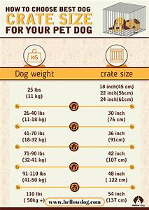 dog crate size chart most perfect crate size for your dog With dog crate sizes and prices