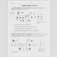 Pedigree Worksheet Answers Mychaumecom