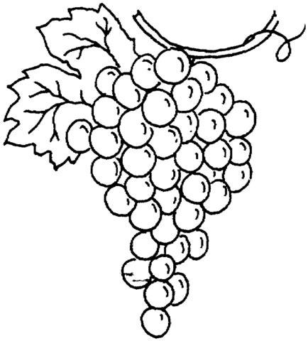 grape  coloring page supercoloringcom