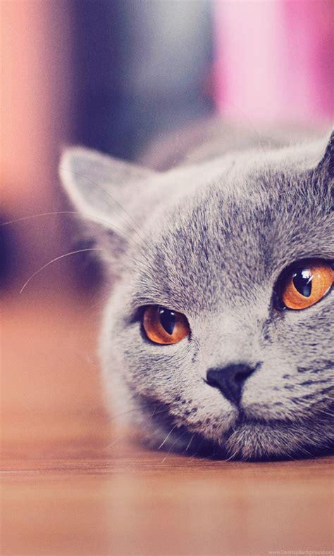 Cute Cat Tumblr Hd Wallpapers For Desktop Backgrounds Hd