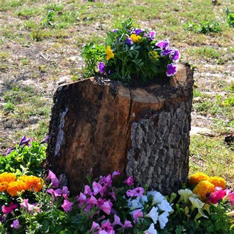 home dzine garden      tree stump