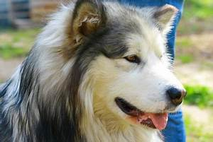 Information About Dogs: Characteristics of a White Arctic ...