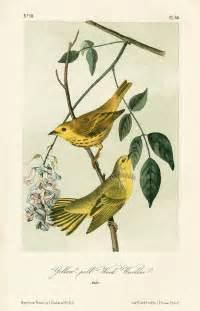 Audubon Bird Prints