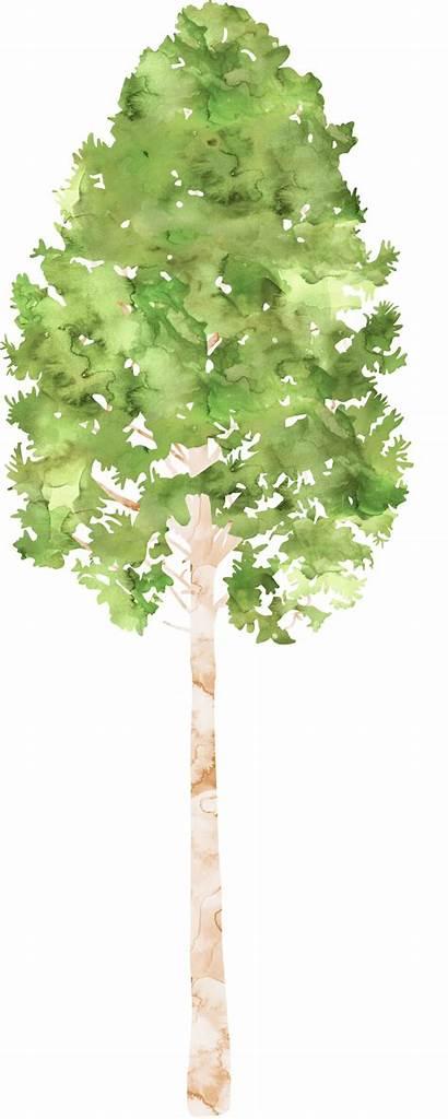 Watercolor Tree Clipart Transparent Summer Camp Nature