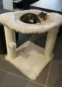 Panier Chat Pas Cher : arbre chat pour chaton elevage persan ~ Teatrodelosmanantiales.com Idées de Décoration