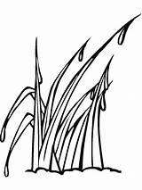 Grass Coloring Tall Gras Ausmalbilder Template Nature Ausdrucken Malvorlagen Kostenlos Zum sketch template