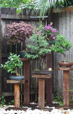 Japanischer Garten Münzesheim by Bonsai Display Outdoors On Bonsai Bonsai