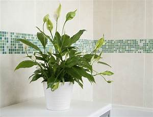 6 ideal plants you should keep in the bathroom With peace lily in bathroom