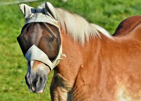 fly horses masks horse mask flies protection against boots guides buying consider before things four
