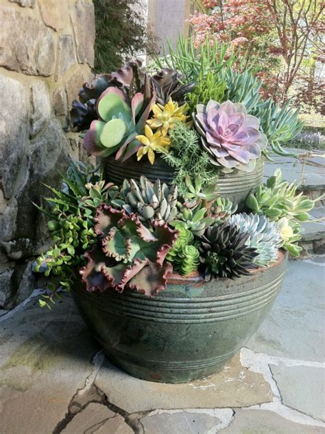 stacked succulent pots     today