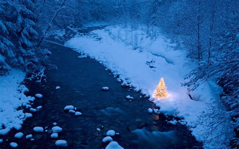 christmas tree snow wallpaper 236310