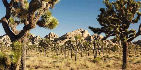 Spotlight: Joshua Tree National Park | Visit California