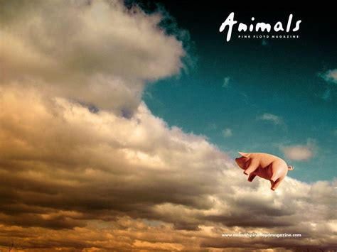 Pink Animal Wallpaper - pink floyd animals wallpapers wallpaper cave