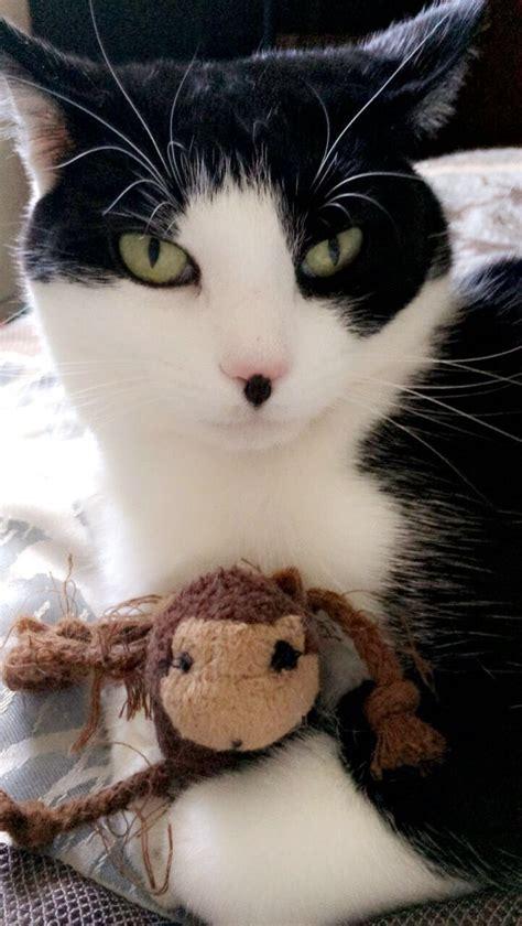 cat names tuxedo nosy cats named animals