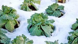 Gemüse Im Winter : winterfestes gem se jetzt noch ernten und geniessen ~ Pilothousefishingboats.com Haus und Dekorationen