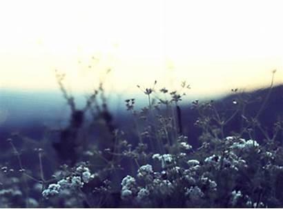 Animated Landscape Nature Travel Wind Animation Flowers