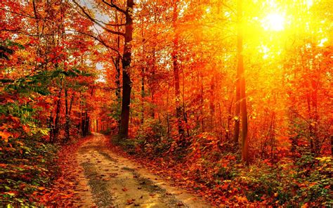 Autumn Season Hd Wallpapers by Autumn Hd Wallpapers 74 Background Pictures