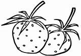 Strawberries Coloring Pages Print sketch template