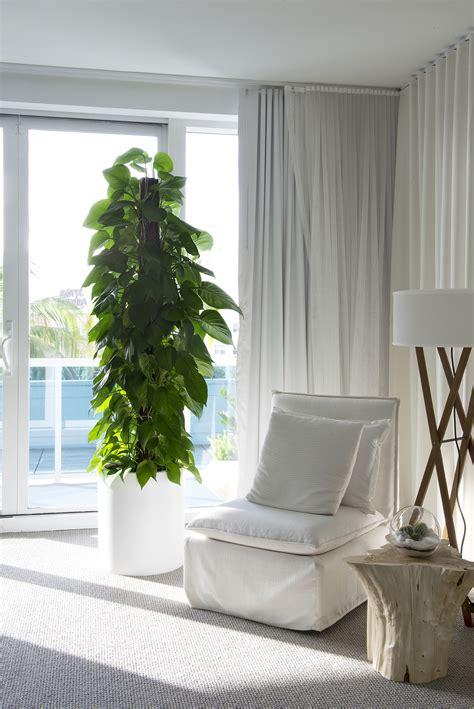 indoor plants  luxury apartments plant  future