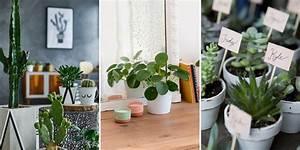 Plantes Pour Chambre : quelles plantes choisir pour mon int rieur ~ Melissatoandfro.com Idées de Décoration