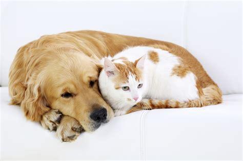 dogs quotes caini pisici si piele boli cats cat animali teksten dog chi cele mai frecvente perro maltratta gato better