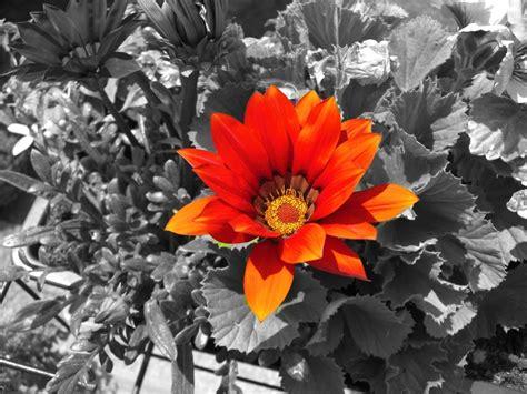 Sind Schwarz Und Weiß Farben by Schwarzwei 223 Mit Farbe Foto Bild Pflanzen Pilze
