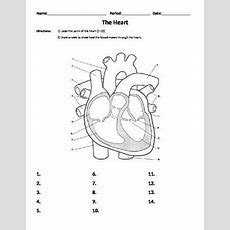 Heart Worksheet  Parts And Flow, Organs, Body Systems, Cardiovascular System
