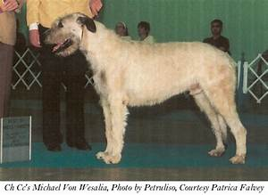 Red Wheaten Irish Wolfhound | www.imgkid.com - The Image ...