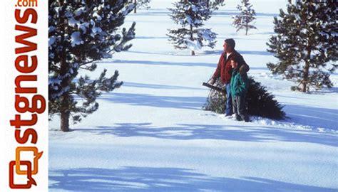 28 best christmas tree permits utah enjoy utah cut