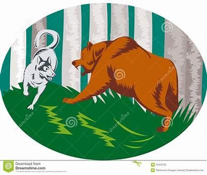 Grizzly Bear Aanvallende Hond Schor Orso Attacking