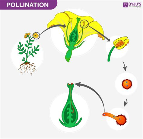 pollination introduction process  types  pollination
