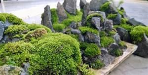 creer un jardin de mousse et de mineral zen pour se With deco jardin zen exterieur 9 ensemble jardin moderne jardin autres perimatres