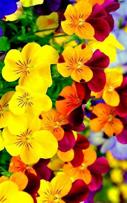 Bright Iphone Flowers Flower Wallpapers 3diphonewallpaper Floral