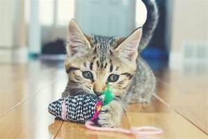 Sisalteppich Für Katzen : baldrian f r katzen das wichtigste im berblick ~ Orissabook.com Haus und Dekorationen