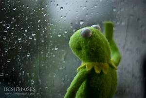 Rainy Days   Kermit 365 - Kermit Going Green